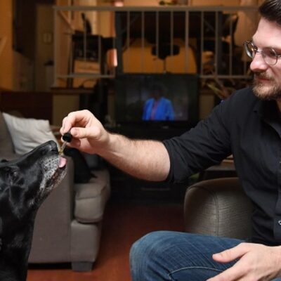 CBD Treats for Dogs – An Effective Alternative