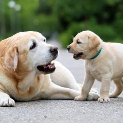 Owning a Dog: How Much Does It Cost?