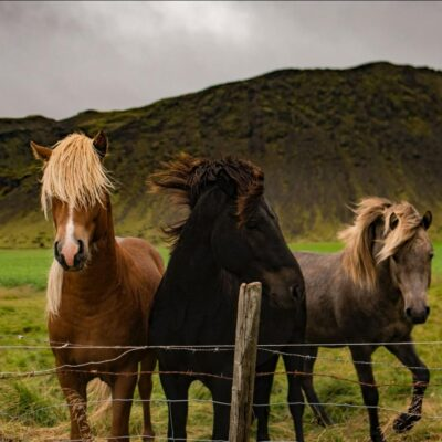 Horse Racing: An Insight Into The Most Popular Race Horse Breeds