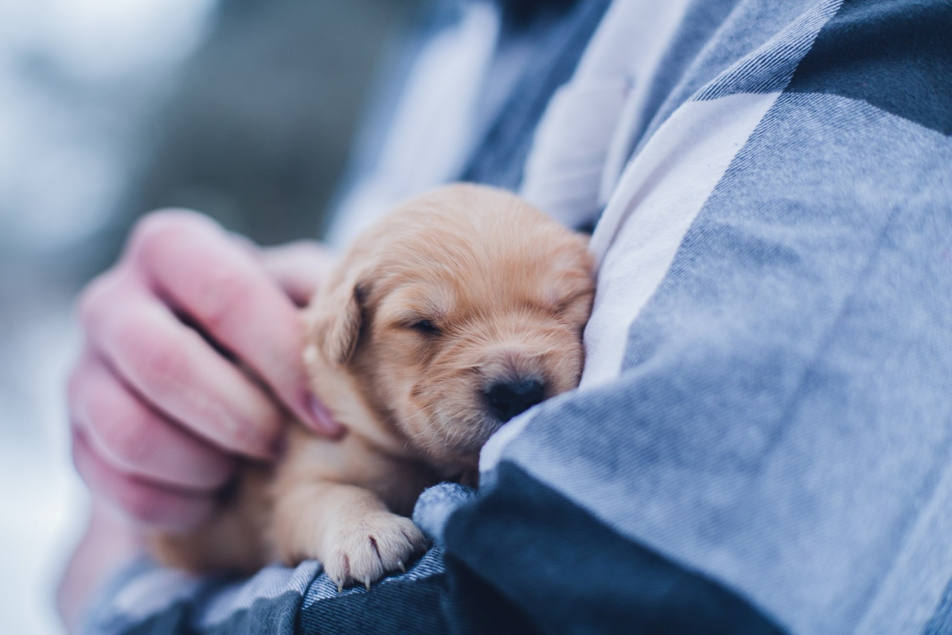 A dog sleeping on a person's lap  Description automatically generated with medium confidence